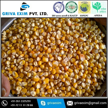 Specification of buyer yellow corn maize