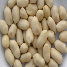100 % Best Quality Origin Indian New Crop Peanut