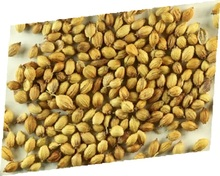 New Crop Coriander seeds