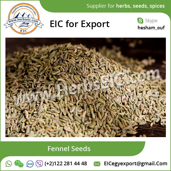 Hot Selling Quality Fennel Seeds/ Seed Fennel at Affordable Price