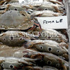 Deliver/Perfect quality for genuine importer of blue 3 spot crabs