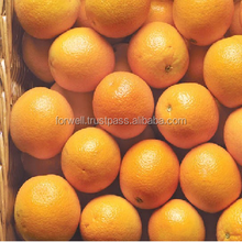 ALL ORANGE TYPES NOW AVAILABLE HERE IN EGYPT