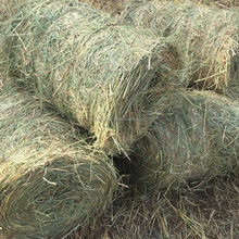 RICE STRAW/ HUSK FOR ANIMAL FEED WITH CHEAP PRICE/LARGE QUANTITY (WHATSAPP +84 964011007)