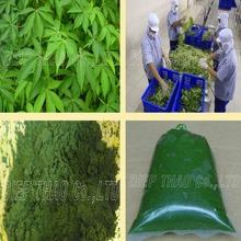FROZEN VEGETABLES/ FROZEN_CASSAVA_LEAVES