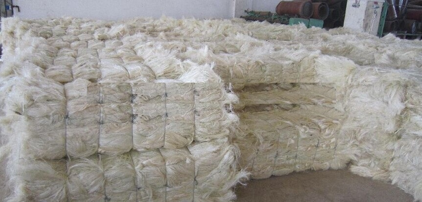 Natural Sisal Fibre/ Sisal Fiber at Best Price for Bulk Buyers