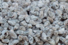 GRADE 1 Cotton Seeds now available