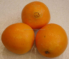 navel orange from Egypt