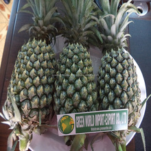 FRESH PINEAPPLE FROM VIET NAM WITH CHEAP PRICE