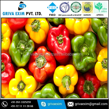 fresh Indian capsicum high quality A grade