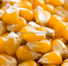 Animal feed 20 ppb Yellow corn