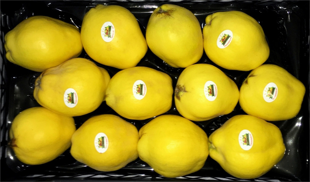 Fresh Quince For Sale Cheap Price