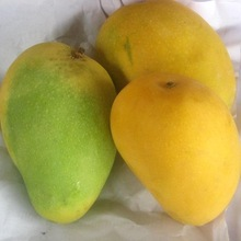 High Quality Fresh Mango, Golden Yellow Mango, Dried Mango Fruit with Reasonable Price