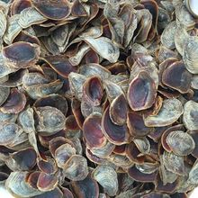 High Quality Dried Shell Murex Operculums