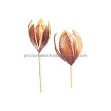 Eco friendly natural lily flower