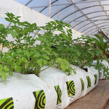 growbags for tomato plants in grow bags