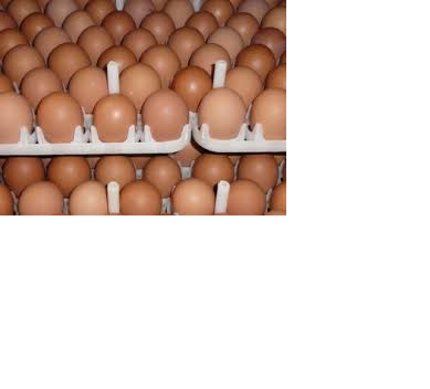 Farm Fresh Chicken Table Eggs