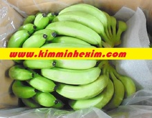 CAVENDISH BANANA FRUIT/ GREEN BANANA/ FRESH BANANA FRUIT