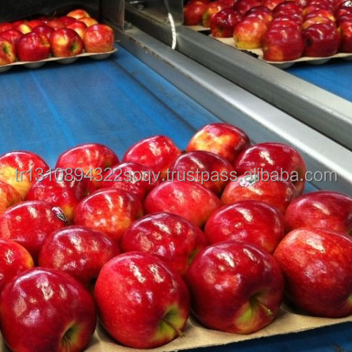 Top Quality Grade A Fresh Apples available