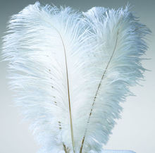 Wholesale Quality Natural OSTRICH FEATHERS