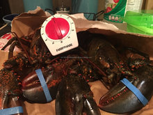 Wholesale wild sea Boston lobster
