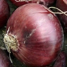 fresh egyptian red onion high quality (A)