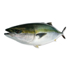 Burikichi Yellowtail Round Seafood Names Sea