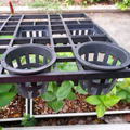 Plastic nursery tray with matching plastic pot & basket for growing orchids