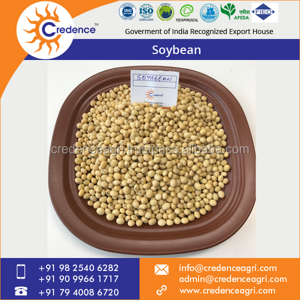 ISO Certified Indian Soyabean Seller