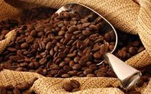 High Quality Arabica and Robusta Coffee Beans