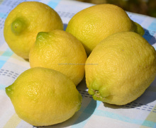 fresh egyptian lemon