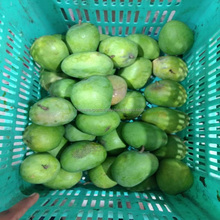 Fresh Green Mangoes From India