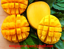 Top Quality Fresh Yellow Golden Mango With Competitive Price
