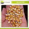 Yellow Corn Seed Maize for Feed Available at Bulk Wholesale Rate