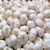 /product-detail/grade-aaa-fresh-garlic-normal-white-garlic-pure-white-garlic-for-sale-62001766502.html