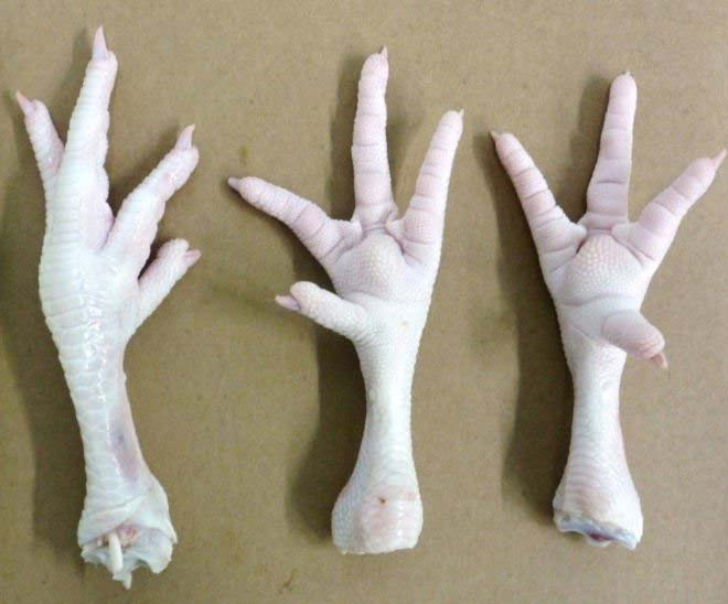 Brazil Frozen Chicken Feet Suppliers
