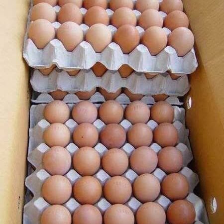 Farm Fresh Chicken Table Eggs Brown and White Shell Chicken Eggs For Sell