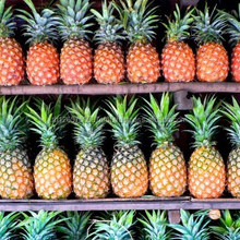 fresh pineapple specification