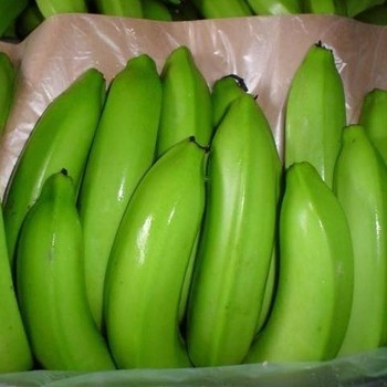 HIGH QUALITY FRESH CAVENDISH BANANA - PRICE $551.13 PER TON