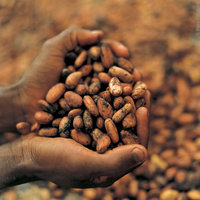 Organic Cacao Cocoa Beans Nibs Pods