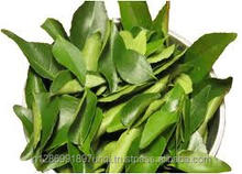 Fresh Curry leaf from India for Export