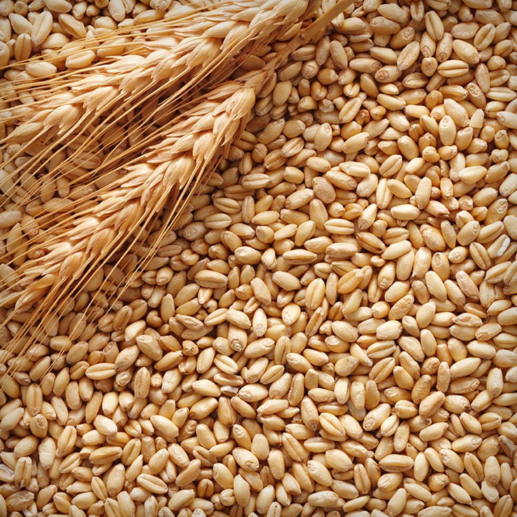 quality requirements on barley for beer production essay Barley quality combine equipment and combine systems adjustments must be considered during the harvesting operation platform, feeder, feeder house.