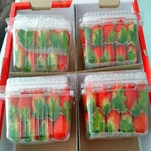 hot sale IQF delicious fresh egypt strawberry in good quality in carton Fresh Strawberry From South Africa