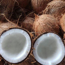 Pollachi King Size Coconut for Sale