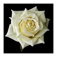 High germination White Rose Seeds for planting / White Rose flower Seeds