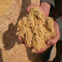 Fish Meal For Cattle Feed/Fish Meal For Poultry Feed