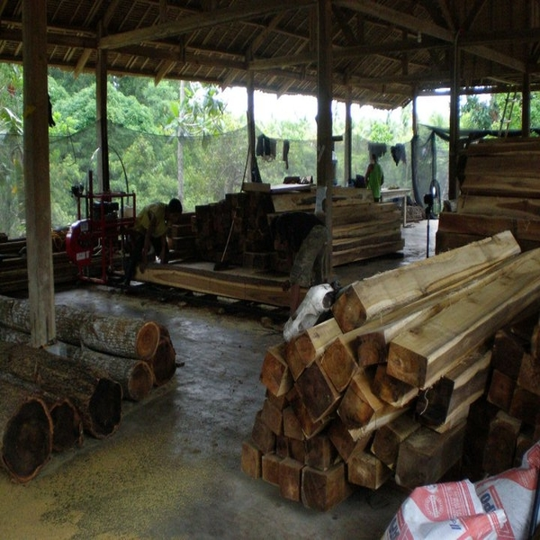 Timber and Teak Woods