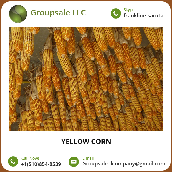 Best grade Yellow Corn at Wholesale Price