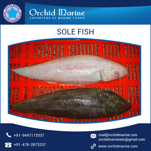 Rich Taste, Fresh Quality Sole Fish Sea Food at Reasonable Price