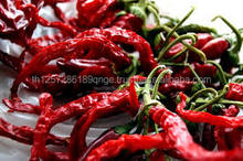 Fresh/Dried Chili/Red Pepper at affordable prices