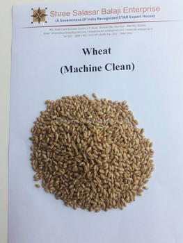 GOOD QUALITY OF INDIAN WHEAT AVAILABLE FOR EXPORT